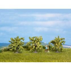 Noch 25115 Zitronenbäume 3...